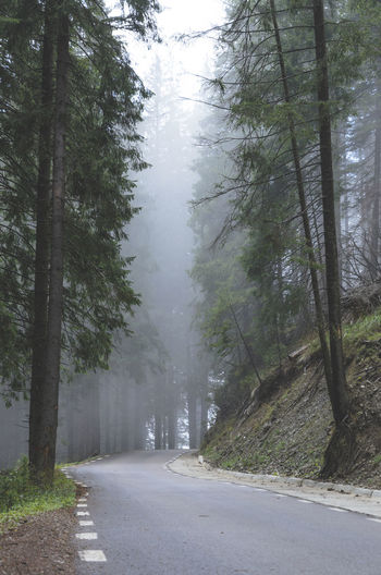 The road is foggy Beauty In Nature Day Fog Forest Landscape Mist Nature No People Outdoors Road The Way Forward Tranquility Transrarau Tree