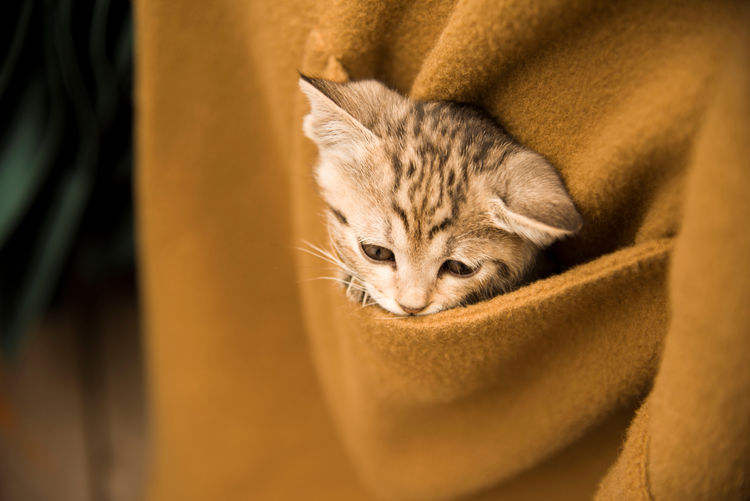 Close-up of cat in coat