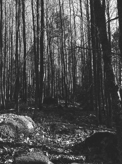 Tight forest Longwalks Tadaa Community Tadaarefuge Forest Trees Black&white Tight