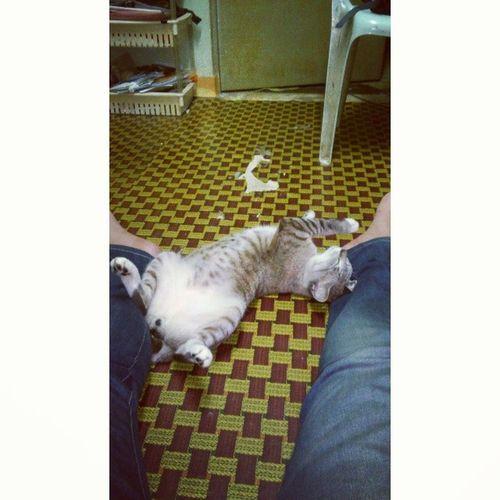Gaya apa ini Meow hang tidur ? Moodkenyang dapat makan ikan sekor..