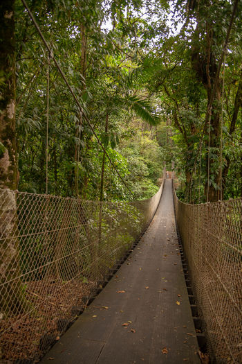 Costa Rica - January 2019 The Way Forward Plant Direction Tree Forest Nature No People Growth Land Footpath Connection Tranquility Diminishing Perspective Day Green Color Transportation Outdoors Bridge Beauty In Nature Footbridge Adventure Jungle Leaving Civilization