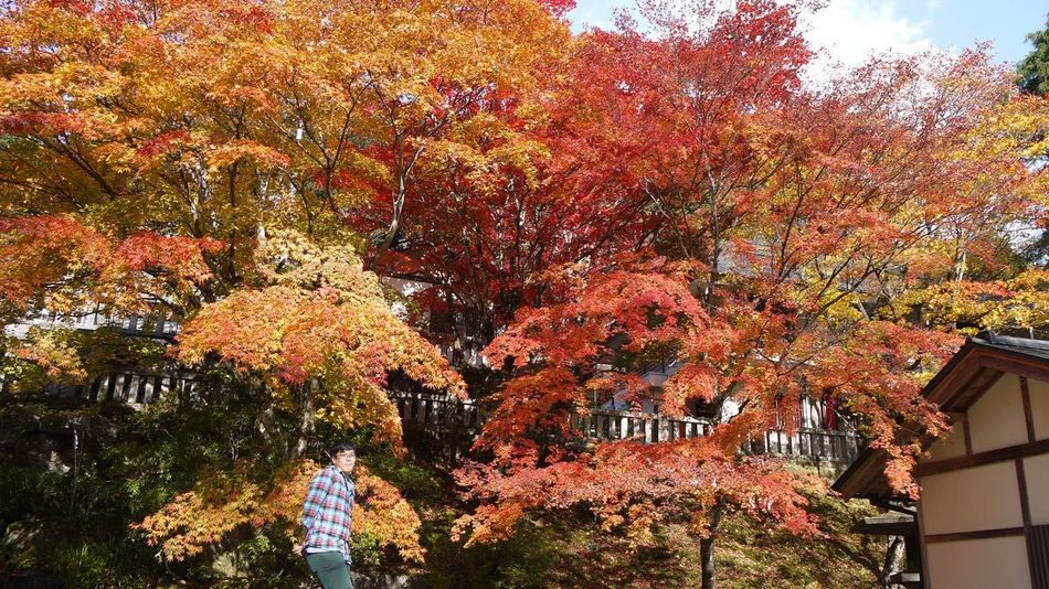 Autumn Beauty In Nature Branch Building Exterior Change Day Growth Nature Orange Color Scenics Season  Sky Tranquility Tree