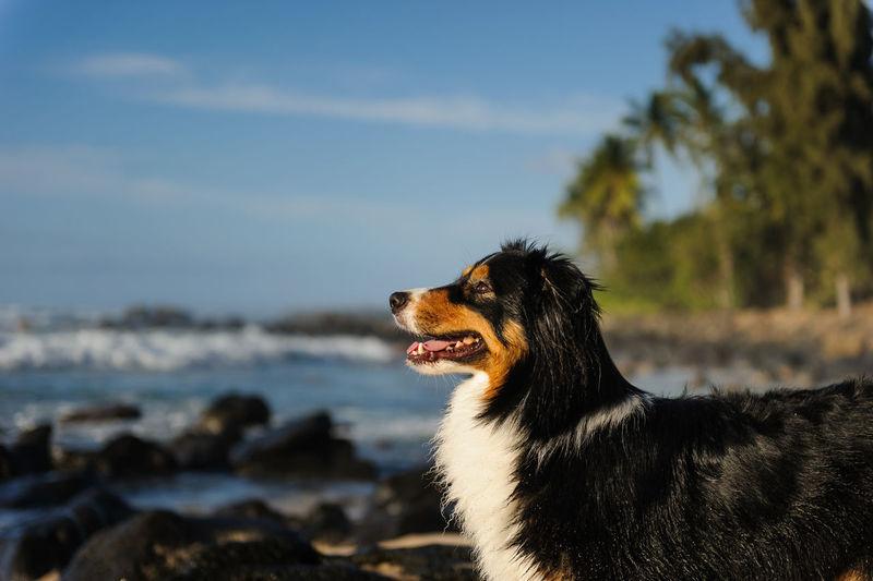 Dog looking away at sea shore