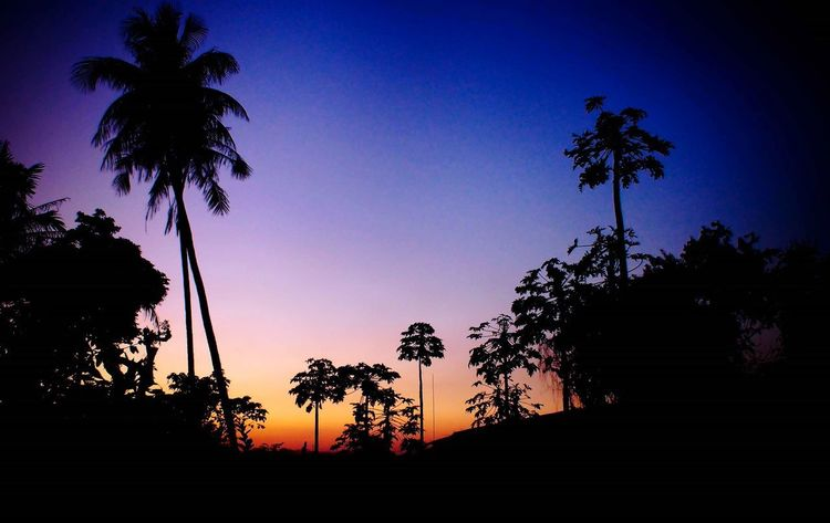 Palm Tree Tree Silhouette Sunset Nature Growth No People Beauty In Nature Scenics Tranquility Outdoors Tree Trunk Sky Clear Sky Tree Area