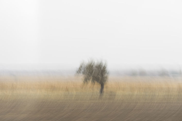 Nature Autumn Motion Motion Blur Blur Blurred Motion Single Tree Tree Rural Scene Agriculture Fog Field Sky Landscape Grass Isolated Single