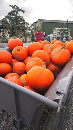 Pumpkin time Freshness Food And Drink Food No People Agriculture Vegetable Market Outdoors Healthy Eating Abundance