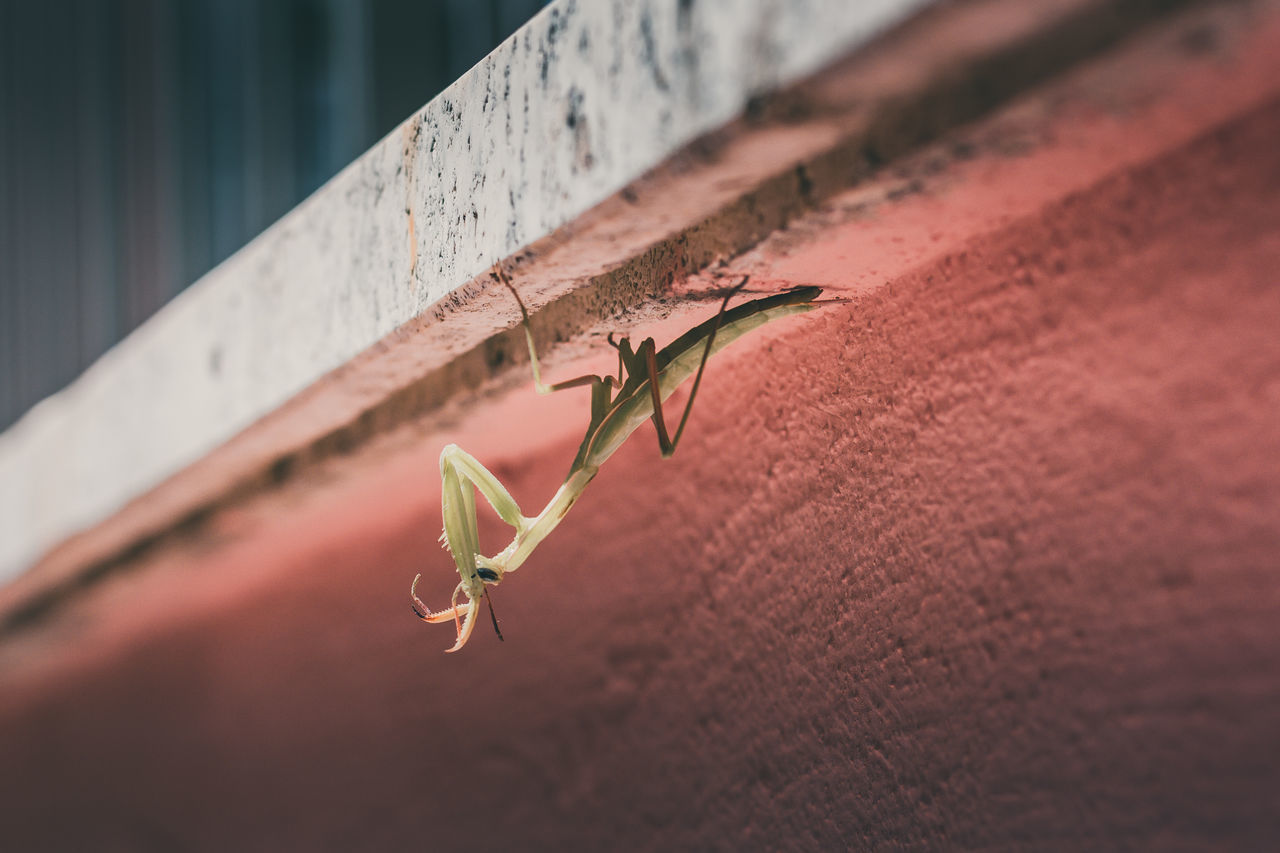 plant, close-up, no people, plant part, leaf, growth, wall - building feature, nature, day, focus on foreground, selective focus, beauty in nature, outdoors, beginnings, fragility, architecture, built structure, vulnerability, green color, red