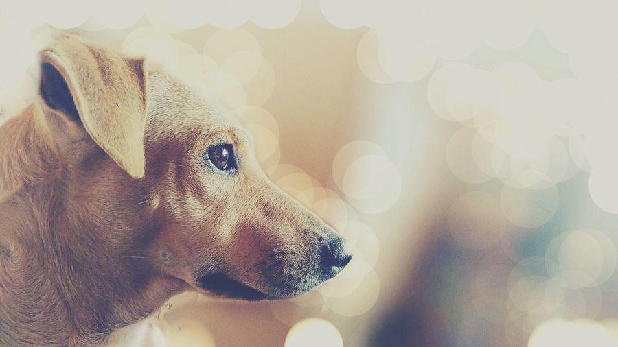 Close-up of dog looking away against defocused light