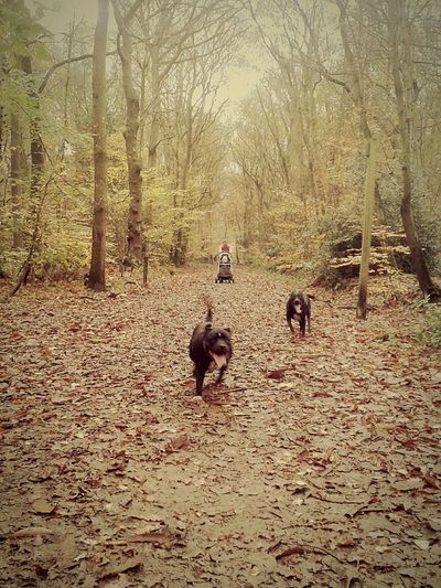 First Eyeem Photo Dogs woods out side Autumn walk