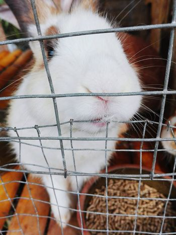 Cage Animal Themes Trapped Close-up No People Day Pets Mammal Furryanimals Rabbit 🐇