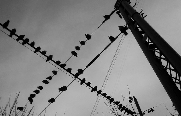 Low Angle View No People Hanging Day Sky Large Group Of Animals Pigeons Animal Themes Silhouette The Street Photographer - 2017 EyeEm Awards