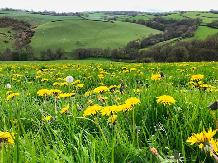 Spring in the countryside Environment Tranquil Scene Yellow Growth Scenics - Nature Agriculture Freshness Rural Scene Nature Green Color Tranquility Crop  Day