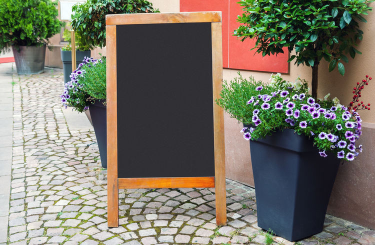 Flower Potted Plant Outdoors Menu Menu Board Blackboard  Chalkboard Blank Restaurant Street Mockup Copy Space Cafe Restaurant Menu Easel