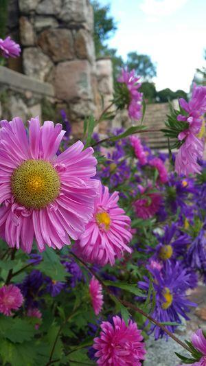 Flower Naturaleza Belleza Flores Jardin