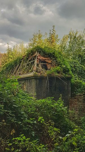 Lost Place Gladbeck Lost Place Lost Place In Deutschland Ruine Ruined Buildings Green Tree Sky Cloud - Sky Growing Young Plant Farmland