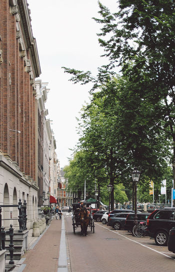 Architecture City City Life City Street Day Horse Outdoors People Street Travel Destinations Tree
