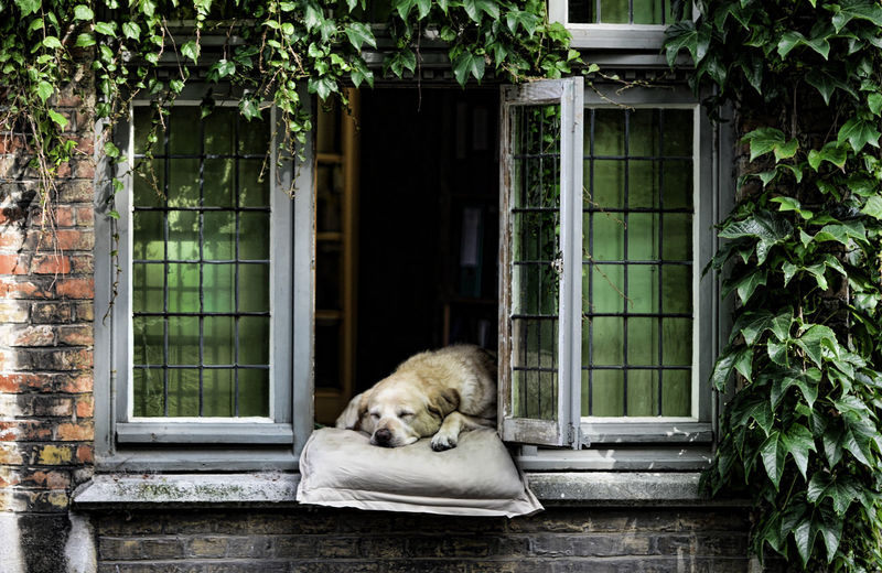 Brugge, Belgium Day Dogs Of EyeEm Dog❤ Mammal No People Outdoors Pets Plant Relaxation Sleeping Sleeping Dog Window Sill