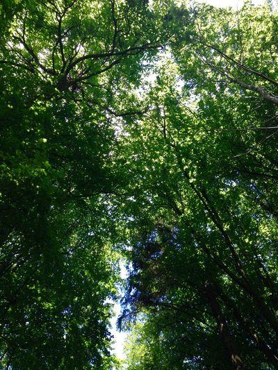Tamar Trails Taking Photos Enjoying Life Enjoying The Sights IPhone IPhoneography Wandering Walking Around