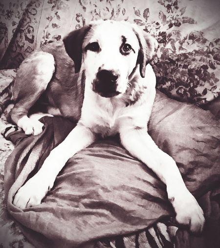 Lovelydog  MisterJackson