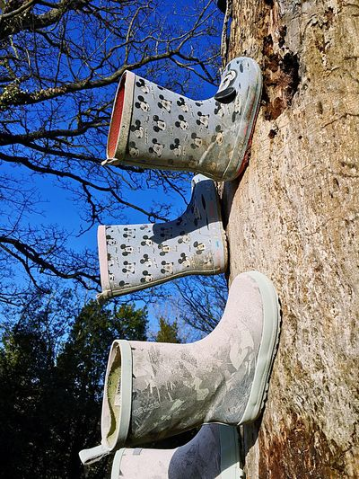 Low angle view of shoes on tree against blue sky
