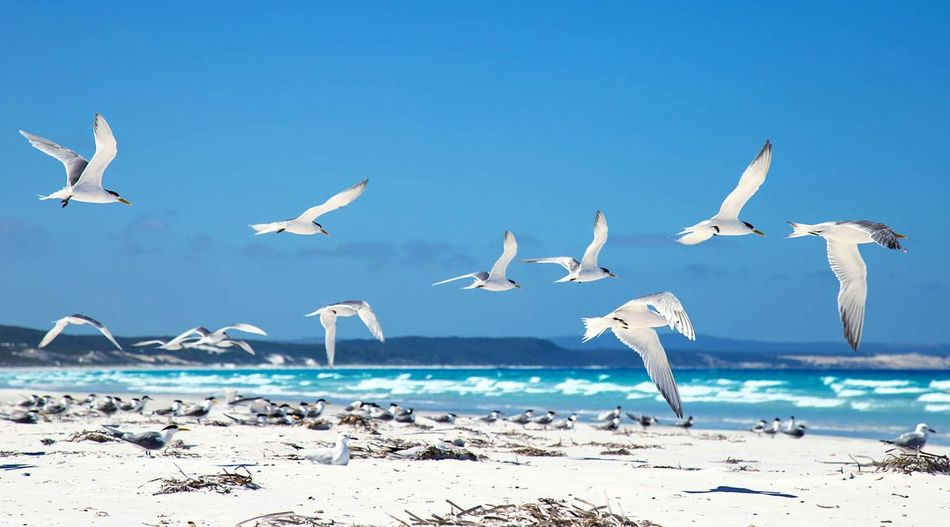 Birds Flying On Calm Beach Against Blue Sky