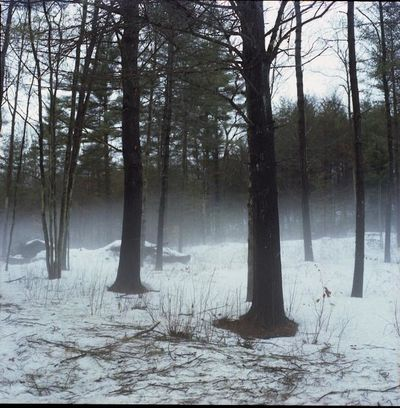 Bare Tree Branch Cold Cold Temperature Covering Day Forest Light Nature Outdoors Season  Snow Tranquility Tree Tree Trunk Weather Winter WoodLand