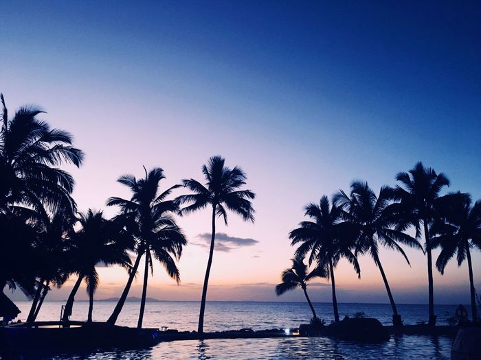 Fiji Travel Destinations Sky Water Sea Tree Scenics - Nature Silhouette Beauty In Nature Palm Tree Beach Tranquil Scene Sunset Tropical Climate Land Horizon Horizon Over Water Plant No People Nature Tranquility Idyllic My Best Photo
