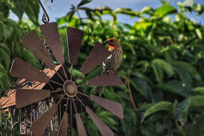 Bird Finch House Finch Bird Feeder Birdwatching Leaves Outdoors Nature