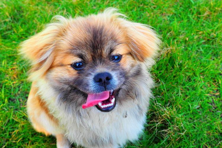 Cute Pets Dogs