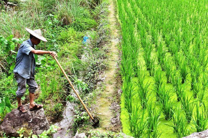 Chinese Worker Farmer Zhejiang,China Colors