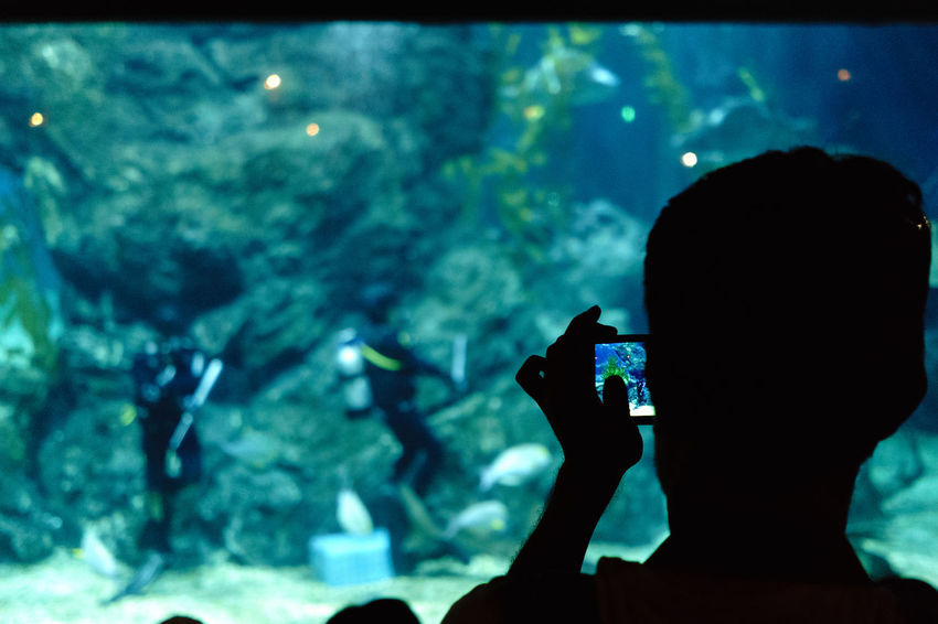 Aquarium Aquarium Life Lose-up Focus On Foreground From Behind Headshot Lifestyles Light And Shadow Personal Perspective Photographing Smartphone Taking Photos Blue Water Unrecognizable Person Colour Of Life Snap A Stranger