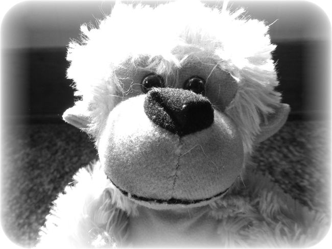 Back When I Had A Name Black & White Black And White Childs Toy Forgotten Toys Friend Monkey Monkey Face Playtime Stuffed Animals
