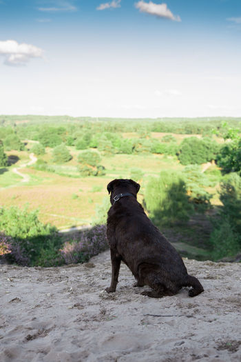 Labrador is enjoying the viewDog One Animal Pets Animal Themes Outdoors Day Sitting Labrador Retriever Nature Portrait Sky View Tranquility No People Landscape Labrador Animal Wanderlust Breathing Space The Week On EyeEm Pet Portraits Lost In The Landscape #FREIHEITBERLIN