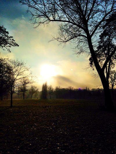 Running Morning Light My Fuckin Berlin Fog