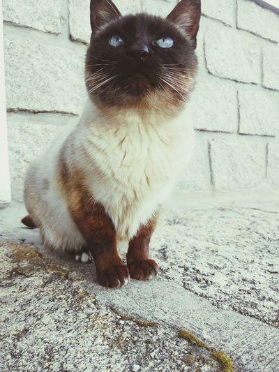 February2015 Animal_collection Serradaestrela Seia Nature Photography Cat