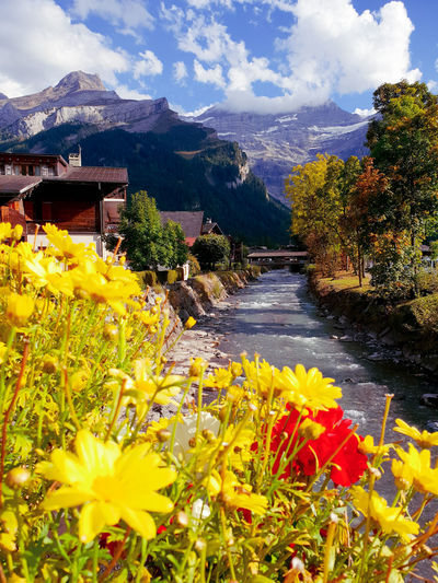 Schweiz Schweizer Alpen Schweiz 🇨🇭, Domkashtana осень Herbst Kastanien Herbststimmung Fall каштаны Flower Flower Head Mountain Water Yellow Uncultivated Wildflower Sky Plant Mountain Range