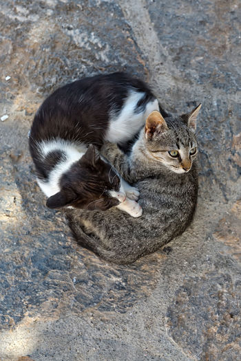 Two cats into resting on one another Animal Themes Beauty Beauty In Nature Cat Day Domestic Animals Domestic Cat Feline Greece High Angle View Island Mammal No People One Animal Outdoors Pets Portrait Sitting Summer Travel