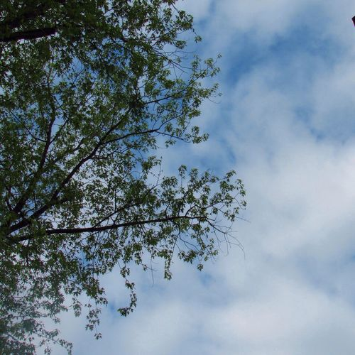 A little blue 💙 Sky Tree Low Angle View Cloud - Sky Beauty In Nature Directly Below Scenics - Nature Tranquil Scene