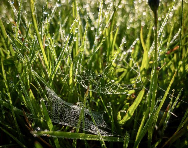 Close-up of wet spider web on plant