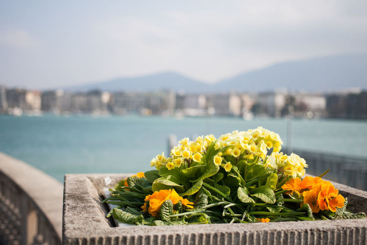 Beauty In Nature City City Cityscape Day Flower Geneva Mountain Nature No People Outdoors Sea Switzerland Travel Destinations Water