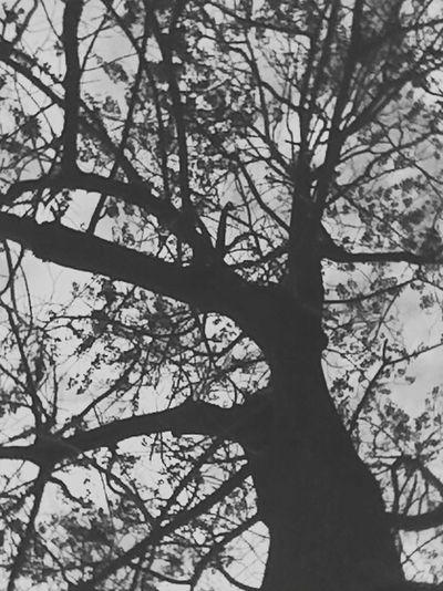Tree Wood Leafs Sky