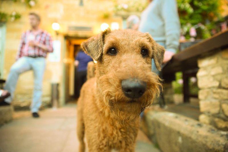 Close-up of irish terrier dog by men on walkway