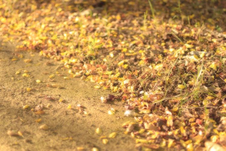 Field Autumn