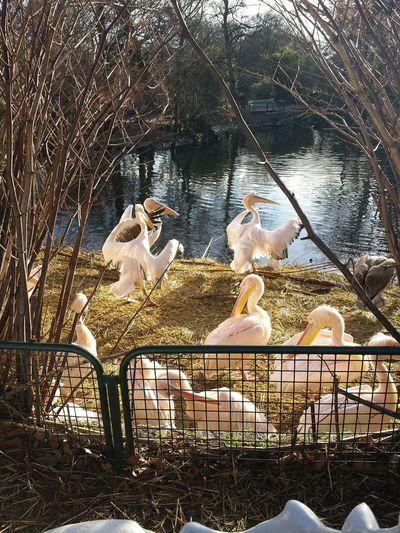 Animals Birds Amsterdam Artis
