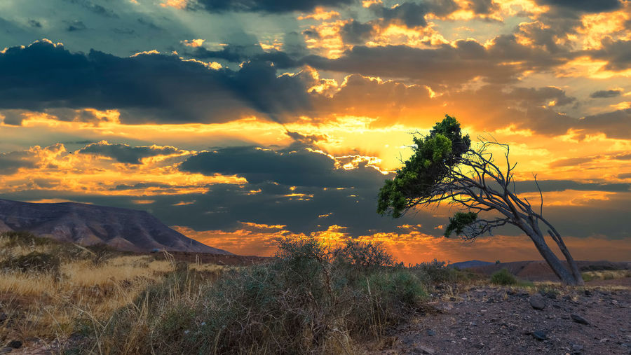 Lone Tree Beauty In Nature Cloud - Sky Day Grass Growth Landscape Mountain Nature No People Outdoors Plant Scenics Sky Sunset Sunset #sun #clouds #skylovers #sky #nature #beautifulinnature #naturalbeauty #photography #landscape Tranquil Scene Tranquility Tree Capture Tomorrow