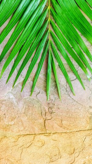 High angle view of palm leaves