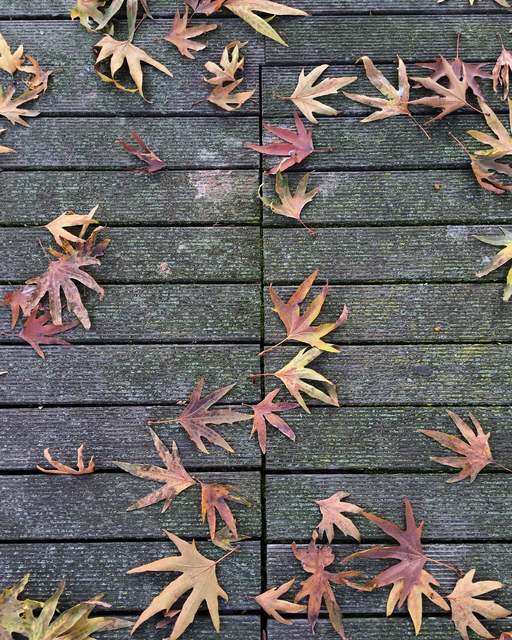 High Angle View Of Autumn Leaves On Boardwalk