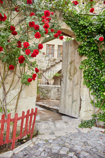 Red roses in front of building