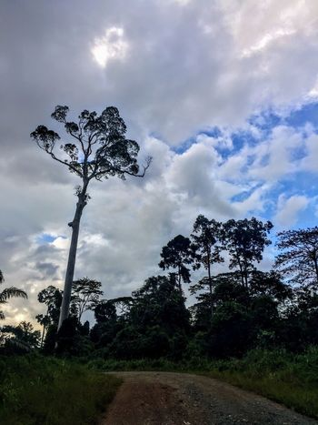 Tree Sky Nature Cloud - Sky Beauty In Nature Tranquil Scene Tranquility Landscape Scenics Outdoors Tree Trunk Growth Low Angle View No People Day Lone Forest Branch Grass Tabin Wildlife Reserve Tabin Wildlife Resort Tabin Lahad Datu Rainforest Borneo