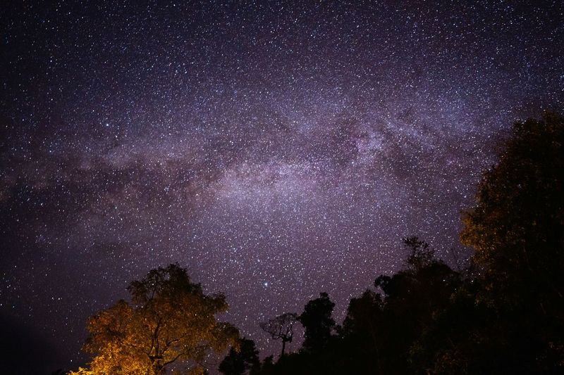 Low angle view of trees against sky at night with milky way